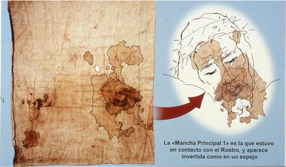 O Sudário de Oviedo (83 x 53 cm) está na Câmara Santa da Catedral de San Salvador de Oviedo (Astúrias, Espanha). Este sudário deve ser o pano que cobriu a cabeça de Jesus (João 20:7). Uma arca, com o sudário e outras relíquias, veio de Toledo a Astúrias, em 711, pouco depois da invasão muçulmana. A antiguidade da arca na Espanha, desde o século VII, e as semelhanças com o Sudário de Turim: disposição das manchas e tipo de sangue (AB), pólen, etc., demonstra que o Sudário de Turim é anterior…