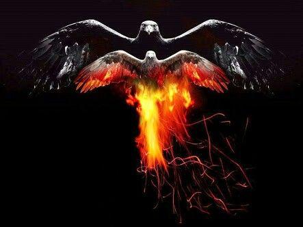 Aguila de  fuego