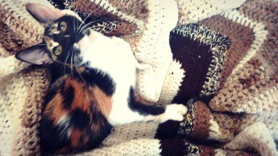 Alana (y sus orejas) con su mantita   #GranadaBoom #crochet #ganchillo #crochetblanket #GatitaBoom #instacrochet #instacat #catsgram #gatitos #gatitospuroamor #gatitacorazon #lovecats #crochetandcats #catslover by granada_boom
