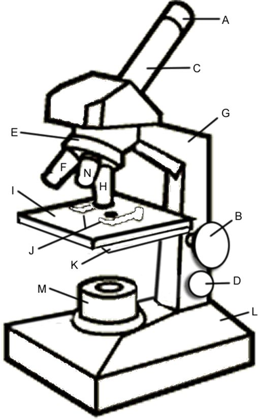 intro  to parts of a microscope  has great questions