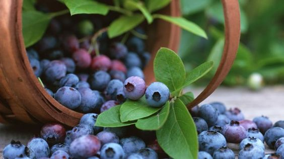 New research carried out through American researchers seems to have exposed in which consuming fresh fruits having flavonoids for example blueberries, apples as well as pears cuts down on the chance of having diabetes.