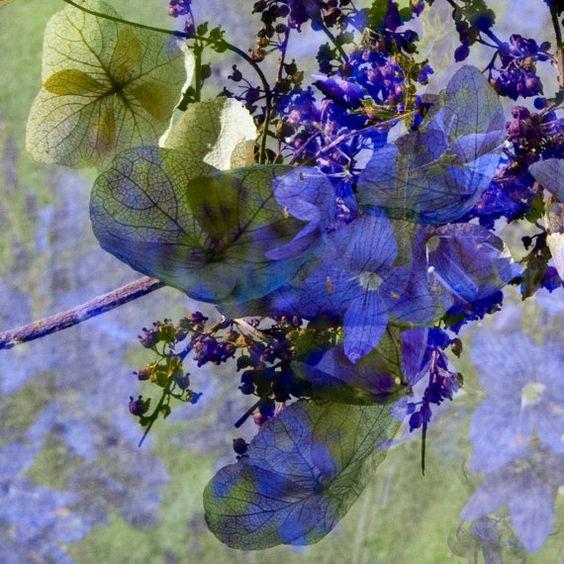 Hydrangea Blue Violet Modern Floral Collage 5x5 by TwoStoryHouse, $12.00
