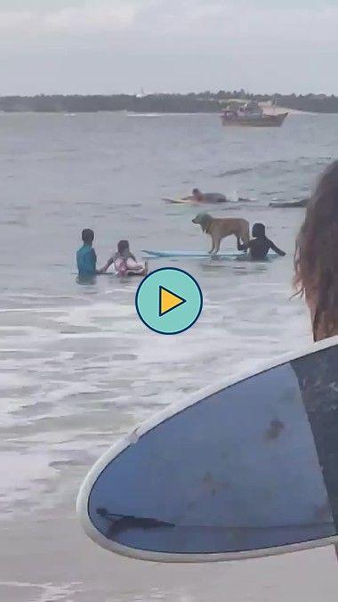 este cachorro adora surfar