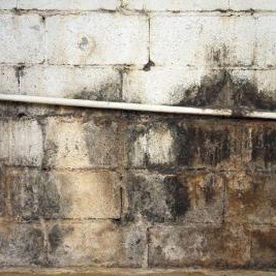 Remove mold off concrete