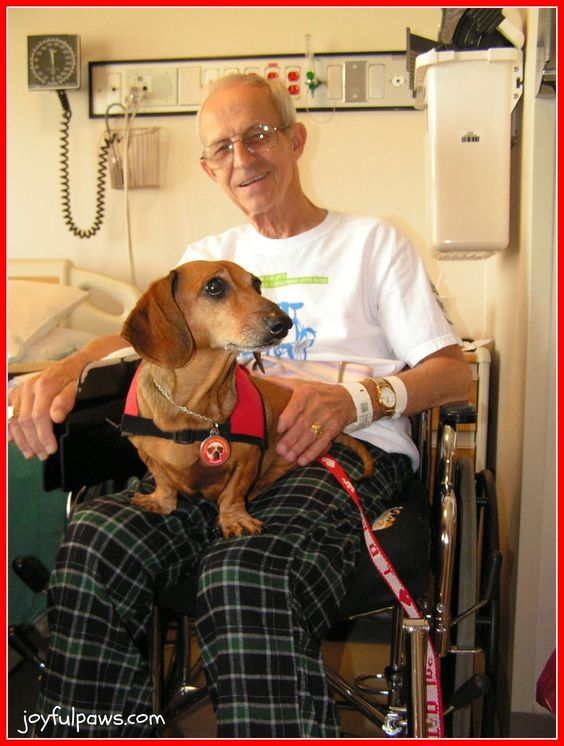 informative speech on therapy dogs Therapeuticallu search this site home &&]amazon: best small dogs for potty training informative speech- therapy dogs click here to download the dog training.