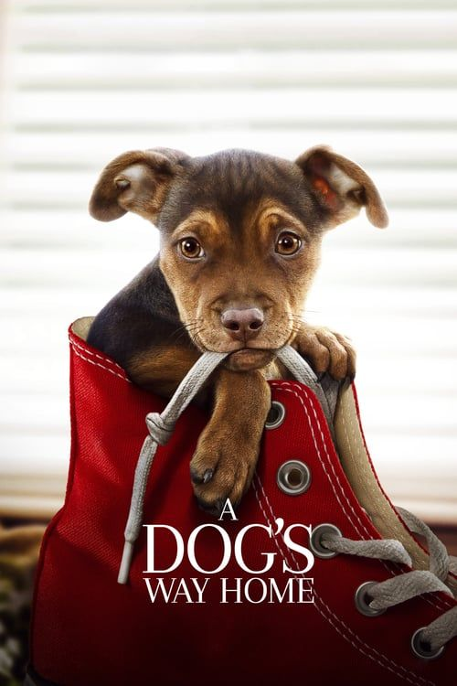 Regarder A Dog S Way Home Film Complet Vf En Francais Streaming Films Complets Films Gratuits En Ligne Film