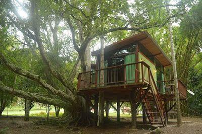Bagagem Pronta - Sua viagem aqui!: Casa na Árvore é novidade de hospedagem no Hotel F...