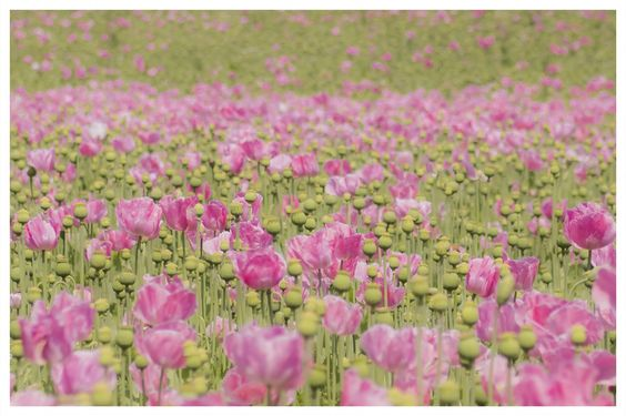 Dreamy pink by Frank Pitsch on 500px