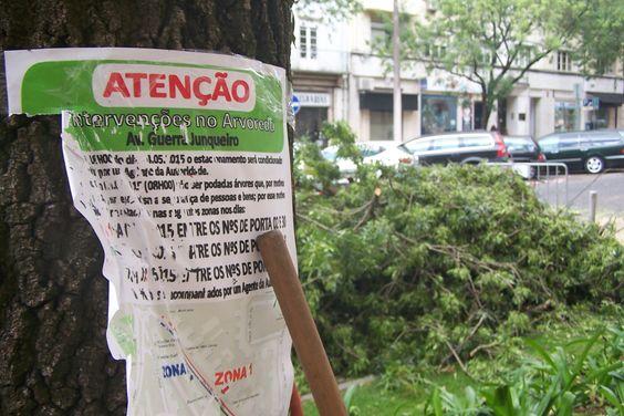 Plataforma cívica pede esclarecimentos às juntas de freguesia sobre cortes de árvores