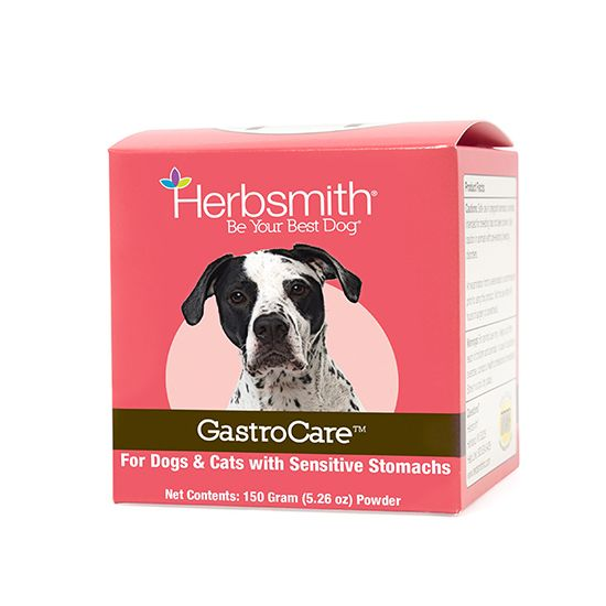 Holistic Pet Tips Cat Nutrition Dog Cat Best Dog Food
