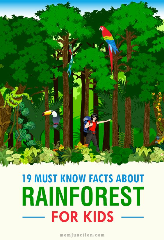 19 Must Know Facts About Rain forest For Kids: Read our post and get the answers to these questions and more.
