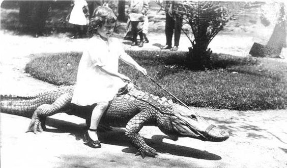 Between the years 1907 and 1953, Los Angeles had an Alligator Farm that was located at 3627 Mission Road in Lincoln Heights. This photo was taken in 1923. Bizarre Los Angeles #Los Angeles History