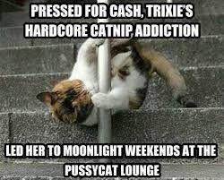 Bildresultat för legalize catnip:
