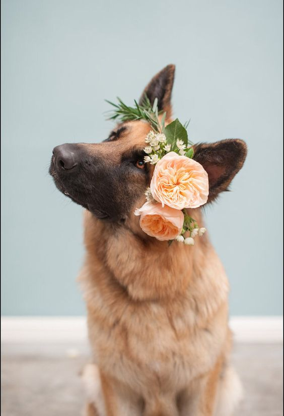 http://rahelmenigphotography.com www.fionnafloral.com Adorable dog with flower crown, floral head wreath, dog flower girl
