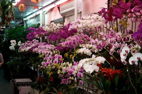 Macau markets