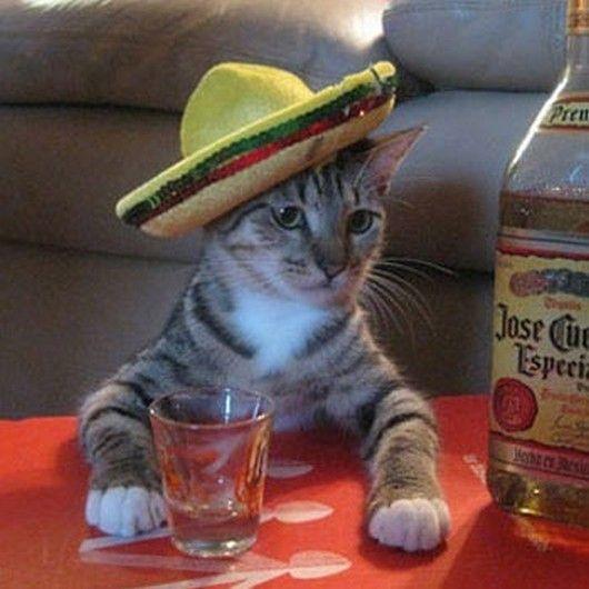 El se hace nostálgico en sus copas.    Resultado de imágenes de Google para http://4.bp.blogspot.com/-rNL_LsZXAyY/T4WzDxqZX3I/AAAAAAAAGnQ/omKG0DfGU_E/s640/cute-animals-in-sombreros-005.jpg