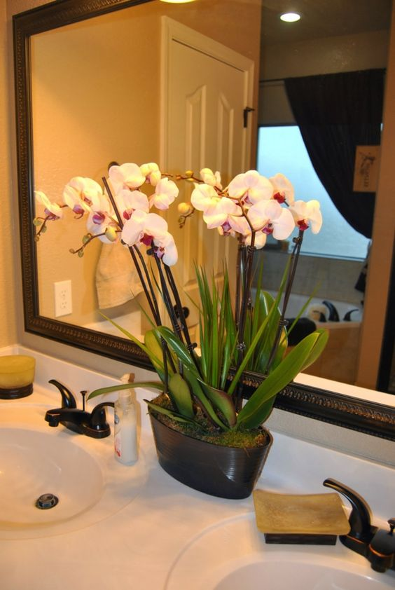 gr npflanzen pflegeleichte zimmerpflanzen topfpflanzen gr npflanzen zimmer orchideen. Black Bedroom Furniture Sets. Home Design Ideas