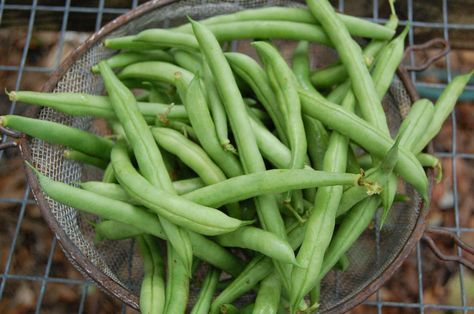 Store Unwashed Fresh Beans In A Reusable Container Or Plastic Bag In The Refrigerator Crisper Whole Beans Sto Green Beans Fresh Green Beans Green Bean Recipes