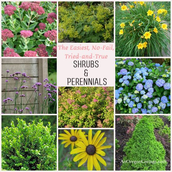 Easy care shrubs perennials gardens flower and hydrangeas for Easy perennial garden plan