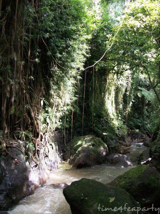 Monkey Forest 20: