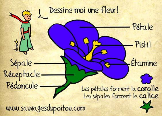 La fleur théorique, Sauvages du Poitou