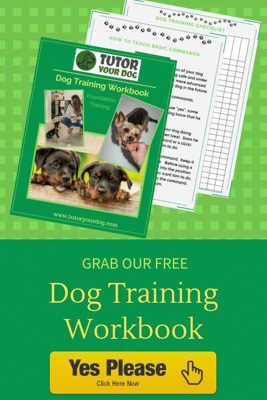 3 Cute Tricks To Teach Your Dog Online Dog Training Dog