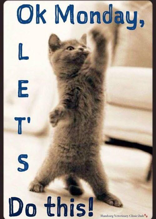Happy Monday Funny Meme : happy, monday, funny, Happy, Monday, Humor,, Quotes,, Quotes