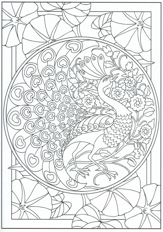Peacock coloring page for adults 11 31 color pages for Peacock crafts for adults