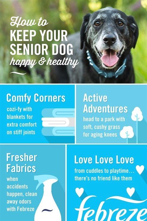 Dog Training Lead 20 Ft Youtube Dog Training Obedience Dog