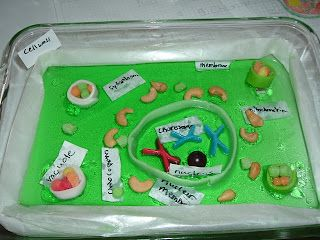 grade 6 jello model of a Plant Cell