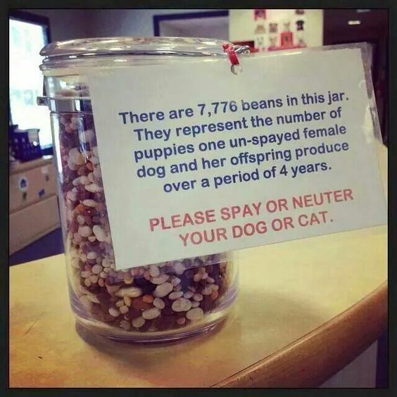 Spay and neuter! Great idea to have on the receptionist's counter!