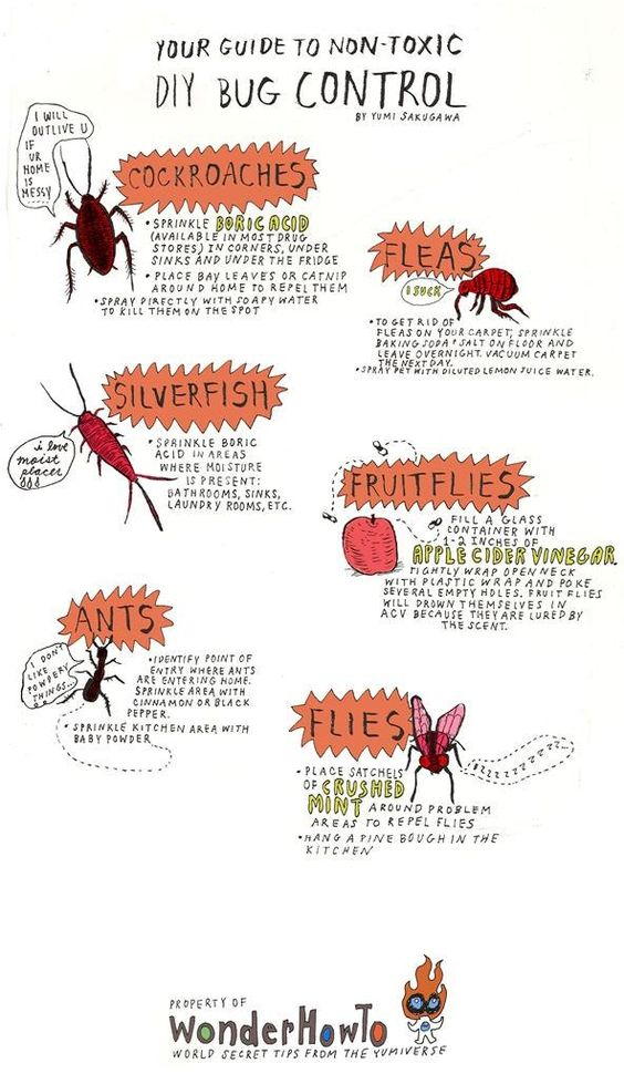 Your DIY Bug Repellent:  Roaches = boric acid, bay leaves, catnip, soapy water;  Silverfish = boric acid; flies = ACV, crushed mint; Ants = cinnamon, black pepper, baby powder; fleas = baking soda + salt, lemon water