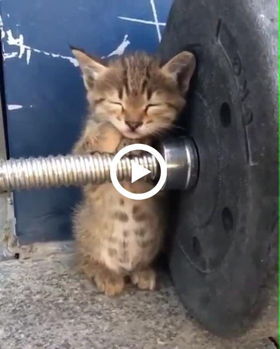 Esse gatinho está com muito sono, olha onde ele foi dormir?