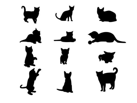 cat template - Cerca con Google