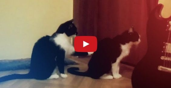 Hahaha! Cat tries to apologize but gets an icy reception.