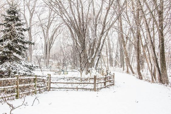 Snowy Path Winter Landscape Photography Wooded by ChasedByBeauty