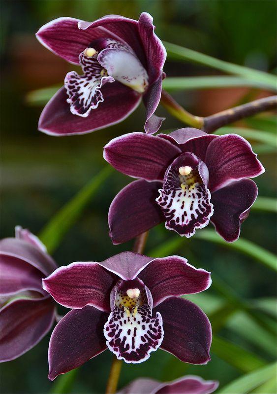 27 hübsche orchideen und blumen mit originellen formen - 2015-11, Hause und garten
