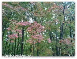 A walk in the woods. Glacier Ridge Metro Park's woods and wetlands.