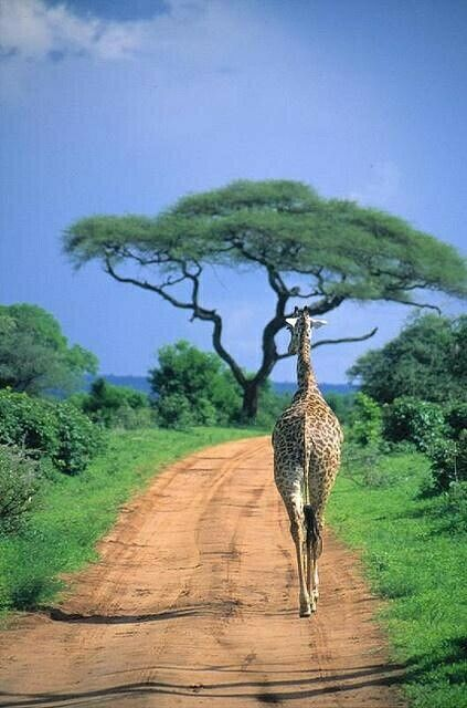 Maono Safaris Tours and Travel Kenya East Africa.