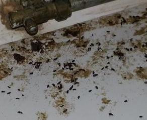 muizen uitwerpselen plug in pest free benelux duurzame. Black Bedroom Furniture Sets. Home Design Ideas