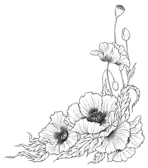 Flower In Line Drawing : Line drawing poppy flower g tattoos