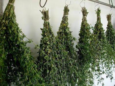 Como secar e armazenar suas ervas mágicas?