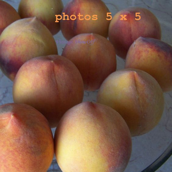 Peaches 05 by VintageShowOff on Etsy, $5.00