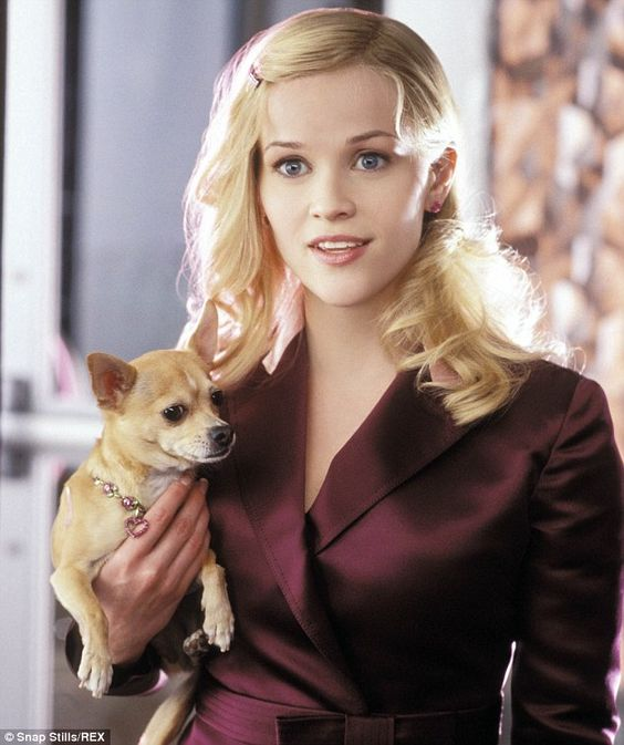 Here is Reese in Legally Blonde with Bruiser Woods, her Chi.  In true life Reese loves animals and has several dogs with her family.