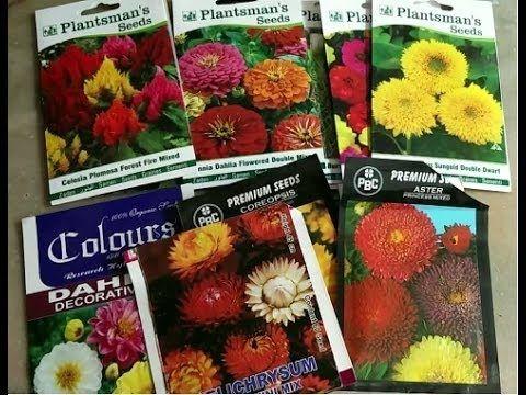 गर म य क म सम क फ ल Summer Flowers Plants To Grow Hindi Urdu Punjabi Youtube In 2020 Plant Hacks Planting Flowers Summer Flowers