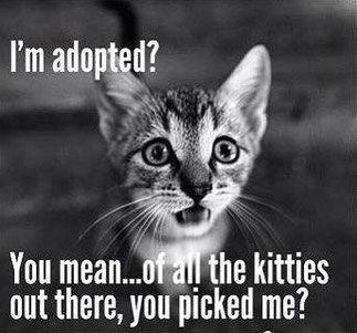 "No, little baby. Of all the kittens out there it was you that picked me âÃÂ'âÂ""¢Â¥Ã¯Â¸Ã'âÃÂ'âÂ""¢Â¥Ã¯Â¸Ã'âÃÂ'âÂ""¢Â¥Ã¯Â¸Ã'"