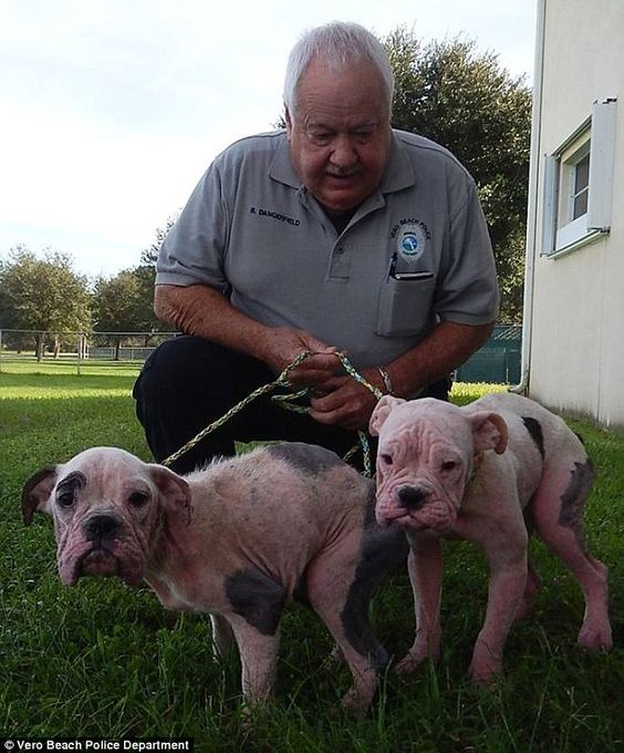Police Hunt For The Monster Who Starved And Dumped Two Baby Bulldogs Sick Puppies Puppy Find Baby Bulldogs