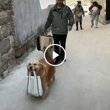 o cachorrinho levando a sacola
