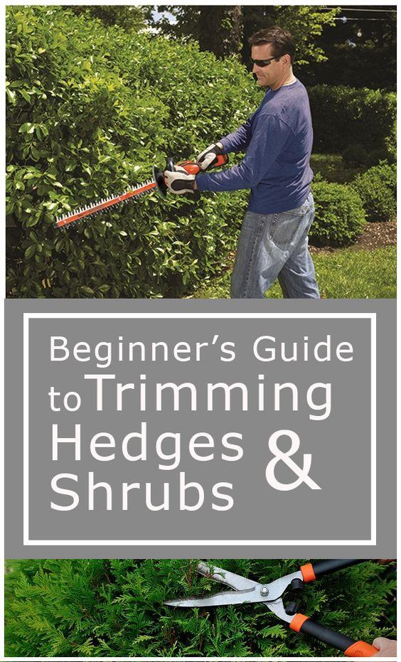 hedges other and shrubs on pinterest. Black Bedroom Furniture Sets. Home Design Ideas