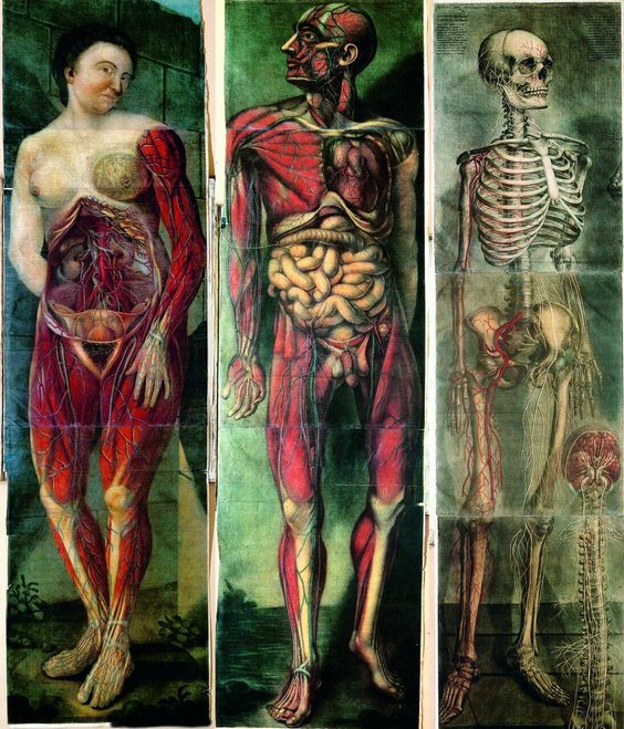 Jacques Fabien Gautier d'Agoty. Myologie Complette... (1746-48 https://pinterest.com/pin/287386019948182616/) via Lindsey Fitzharris (@DrLindseyFitz). See: https://pinterest.com/pin/287386019945755337/ & https://pinterest.com/pin/287386019943307936/ & https://pinterest.com/pin/287386019944816817/ & https://pinterest.com/pin/287386019943042194/ & https://pinterest.com/pin/287386019943099627/